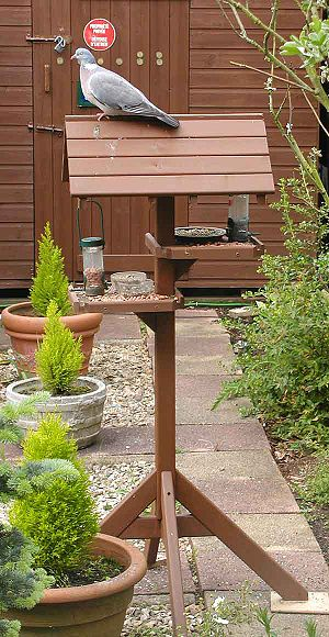 Bird feeding - A bird table, with a wood pigeon on the roof, in an English garden. The table provides water, peanuts, sunflower seeds and a seed mix.