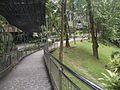 Bird Park in Kuala Lumpur (Malaysia) (48).jpg