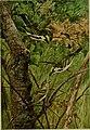 Bird lore (1916) (14755082642).jpg