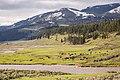 Bison cows & calves, Lamar Valley (33899304424).jpg