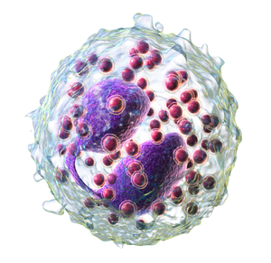 Eosinophil - 3D rendering of eosinophil