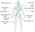 Blausen 0623 LymphaticSystem Female-ar.png