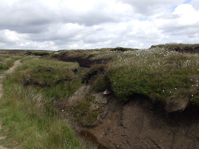 File:Bleaklow6298.JPG