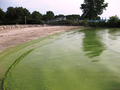 Blue-gree algae bloom Lake Erie.png