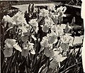 Bolgiano's selected bulbs plants seeds for 1950 fall planting (1950) (20397123231).jpg