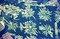 Bolivia-Deforestation-EO.JPG