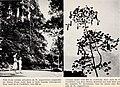 Bonner zoologische Beiträge - Herausgeber- Zoologisches Forschungsinstitut und Museum Alexander Koenig, Bonn (1956) (20368007876).jpg