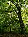 Bosque de las Brujas- Roncesvalles 02.jpg