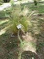 BotanicGardensPisa (10).JPG