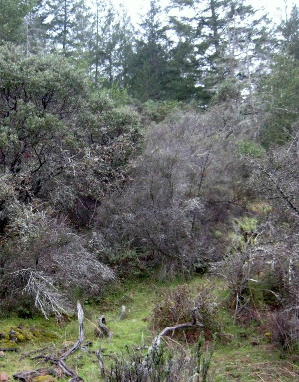 Bothe-Napa Valley State Park - Wikipedia