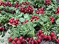 Boucheries Andrés à Rillieux-la-Pape - radis rouges.jpg