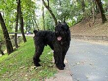 Black Dog Rational Model For Depression Prescribing