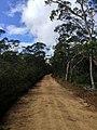 Braeside Trail - panoramio (6).jpg