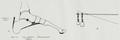 Braus 1921 301.png