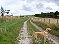 Bridleway, Summerslade Down - geograph.org.uk - 1401641.jpg