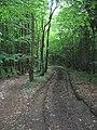 Bridleway in High Castle Wood - geograph.org.uk - 1315019.jpg