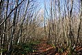 Bridleway through Hurst Wood - geograph.org.uk - 1570717.jpg