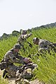 British soldiers with 4th Battlaion, The Parachute Regiment, stabilize a simulated casualty for movement during Operation Black Warrior at the St. Mere-Eglise Drop Zone, Fort Bragg, N.C., July 19, 2013 130719-A-GI910-186.jpg