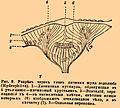 Brockhaus and Efron Encyclopedic Dictionary b16 816-3.jpg