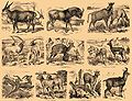 Brockhaus and Efron Encyclopedic Dictionary b2 844-1.jpg