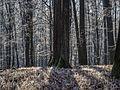Bruderwald-Winter-PC030095.jpg