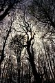 Buchenwald im Nationalpark Jasmund auf Ruegen 02.jpg