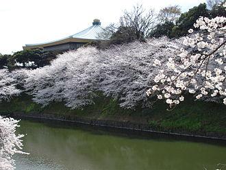 Nippon Budokan - The Nippon Budokan during the cherry blossom