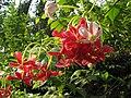 Bunch of Flowers Malappoo.jpg