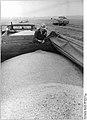 Bundesarchiv Bild 183-1986-0816-017, LPG Lübstorf, Ernte, Abtransport des Korns.jpg
