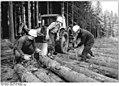 Bundesarchiv Bild 183-W1020-0011, Gehren, Stammholzrücken.jpg