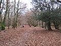 Burnham Beeches, McAuliffe Drive - geograph.org.uk - 1046965.jpg
