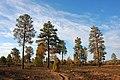 Burnt Mesa Trailhead (5970657226).jpg