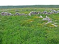 Burren ringfort near Lisgoogan - geograph.org.uk - 863921.jpg
