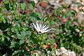 Butterfly (9135076587).jpg