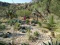 Cadereyta Botanical garden (5760924915).jpg