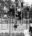 Callenberg klätterställning 1963.jpeg