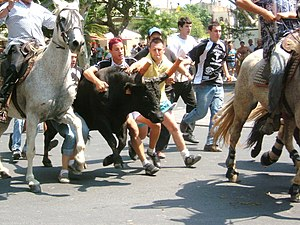 Calvisson - A bandido at Calvisson. Contact has been made with the bull: but it has not yet been stopped.