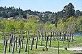 Campo do Côrro - Ponte da Barca - Portugal (4629870726).jpg