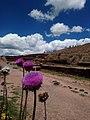Cardos en Tiahuanacu .jpg