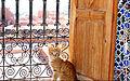 Cat.Ouarzazate.jpg