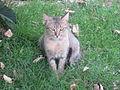 Cat - പൂച്ച 11.JPG