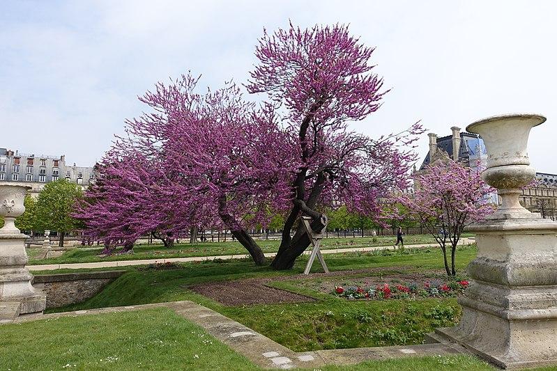Passeios em Paris em abril