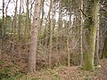 Charlaw plantation - geograph.org.uk - 324539.jpg