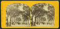 Charles Street Mall, Boston Common, from Robert N. Dennis collection of stereoscopic views 3.png