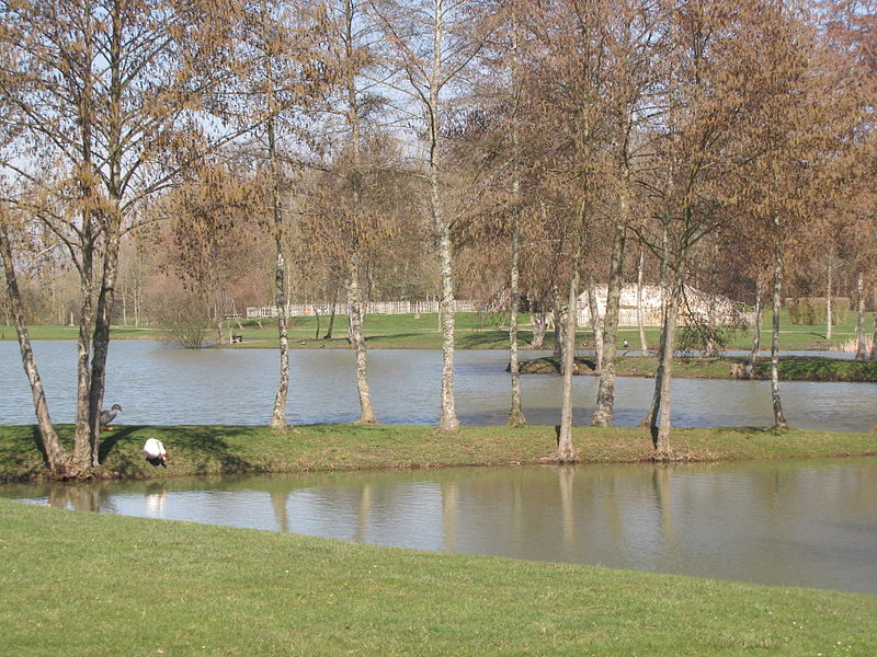 Charny, Yonne (France), the communal pleasure pond, fed by the Ouanne river. A few geese and a swan taking up pension there.