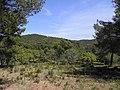 Chemin (Bormes-les-Mimosas) (1).jpg
