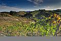 Chianti landscape.jpg