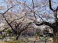 Chidorigafuchi Park in spring 01.jpg