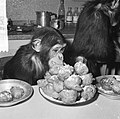 Chimpansees Hilda en Tilly uit Artis, Bestanddeelnr 917-2815.jpg