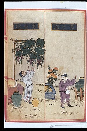 Wine in China - Illustration of the cultivation of grapes and winemaking in Materia Dietetica (Shiwu Bencao 食物本草), Ming dynasty (1368–1644)